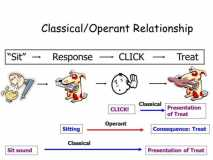 operant-and-classical-connection-2